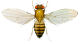 Occupational asthma: Genetics researchers become sensitised to fruit flies in their laboratory