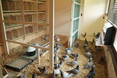 Picture of a pigeon loft